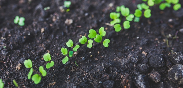 Get Your Seeds Started At Home This Spring